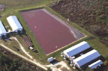 """Hog Farm Lagoons a """"lagoon"""" at a Pig Farm"""