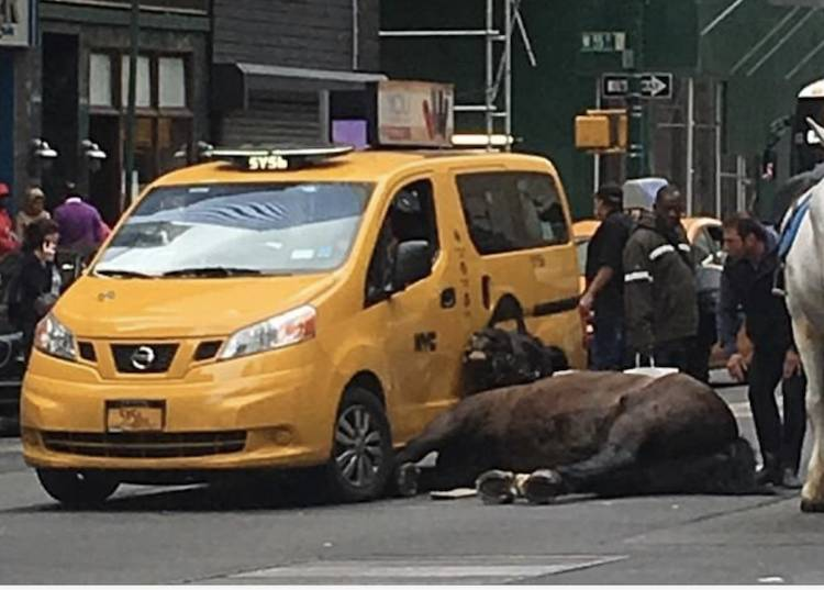 carriage horse under taxi