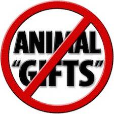 Image from A Well-Fed World: 10 Reasons to Say NO to Farmed Animals as ' Gifts'. Heifer International ...