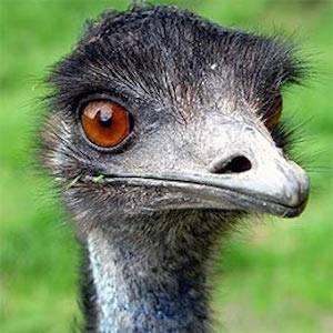 emu killer - photo #19