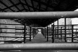 closed slaughterhouse