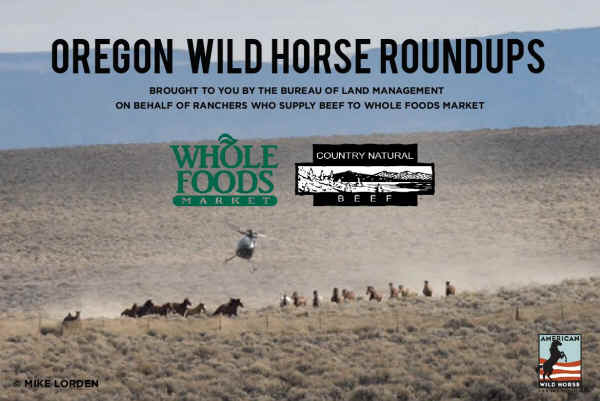 Whole Foods Grass Fed Beef Supplier