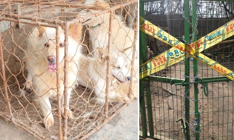 dog meat auction