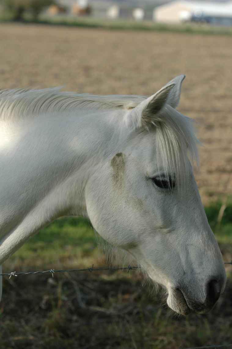 Domestic Horse Photos Animals In The Wild Wildlife