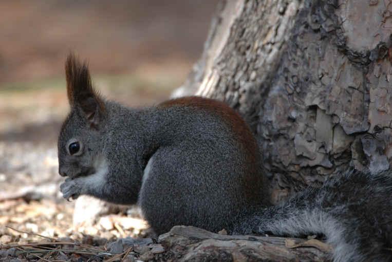 Tree Squirrel Photos Animals In The Wild Wildlife