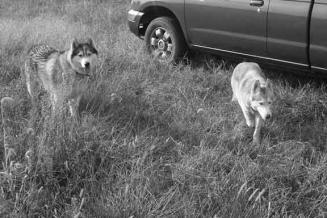 ELECTRIC DOG FENCE | ELECTRONIC DOG FENCE | RADIO DOG FENCING