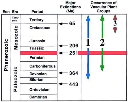 mass extinction in ordivician permian triassic and cretaceous eras This mass extinction almost ended life on dinosaurs 65 million years ago between the cretaceous and the transition from the permian to the triassic.