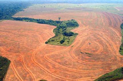 forest ethanol