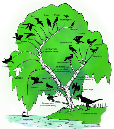 how to draw a phylogeny tree with a subspecies