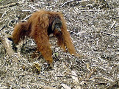 Say no to palm oil products list