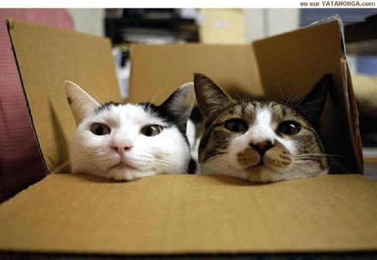 Cual es la foto mas simpatica que teneis de vuestro gato?