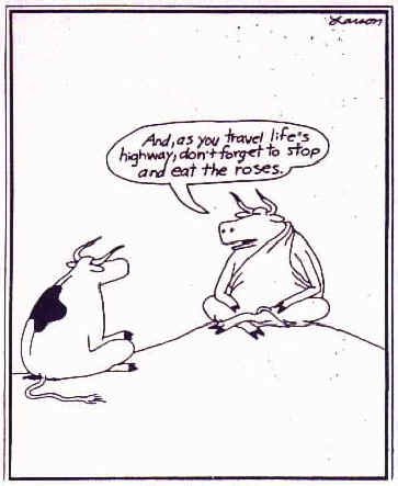 Cow Philosophy Cartoons