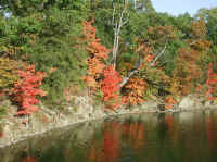 Leaf Peeper's Dream SHL