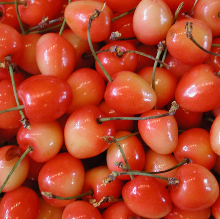Rainier Cherries - Ingredients Descriptions and Photos ...