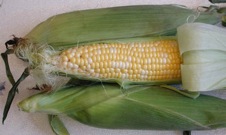 organic-corn-on-the-cob