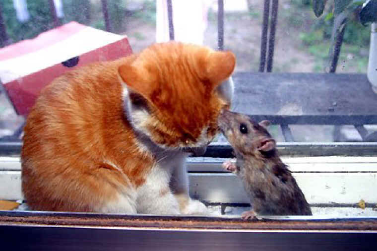 Cat And Mouse Quotes: From All Creatures Animal Stories