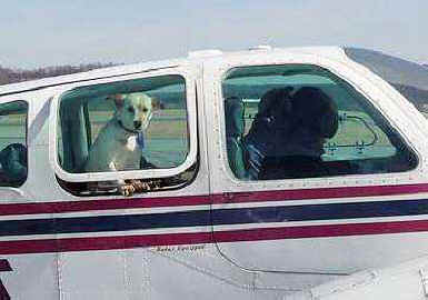 Ten planes fly to save dogs destined for death for Small dogs on airplanes