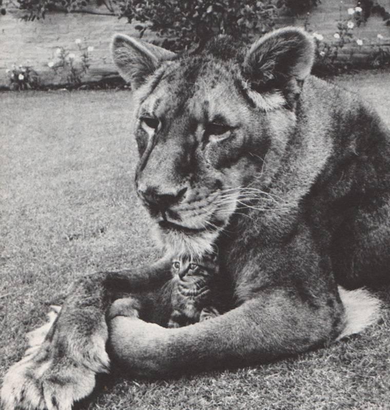Little Tyke: True Story of a Gentle Vegetarian Lioness