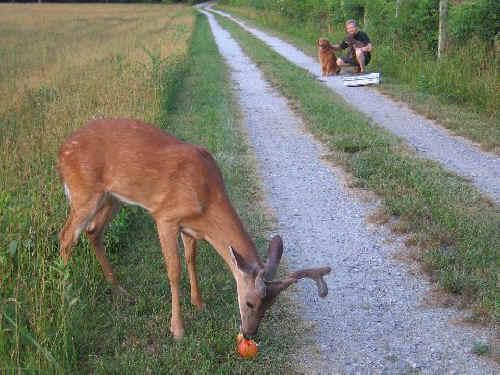 deer  dogs  humans   togetherness